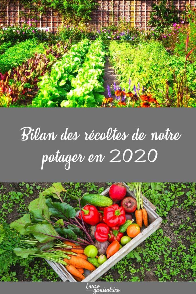En 2020, nous avons récolté pour 737€ de légumes dans notre potager. Je vous explique tout en détail.