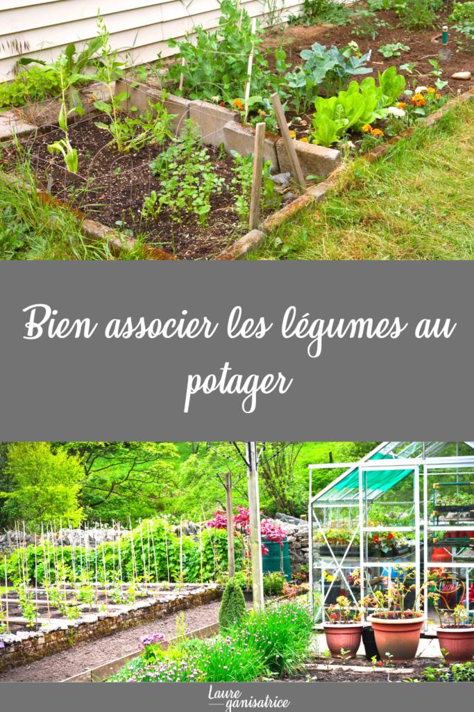 Comment bien associer les légumes au potager #legumes #potager #association #légumes #jardinage #jardin #potager #jardinbio #potagerbio #jardinpotager #tomate